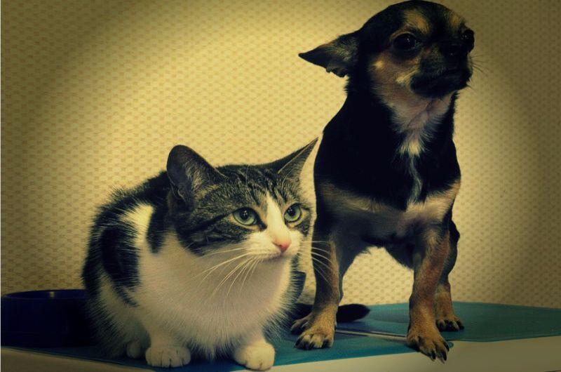 41b87aa664fb Ο νέος νόμος για κατοικίδια και αδέσποτα ζώα